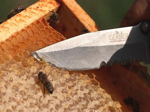 [FREEL] Bees Swarm