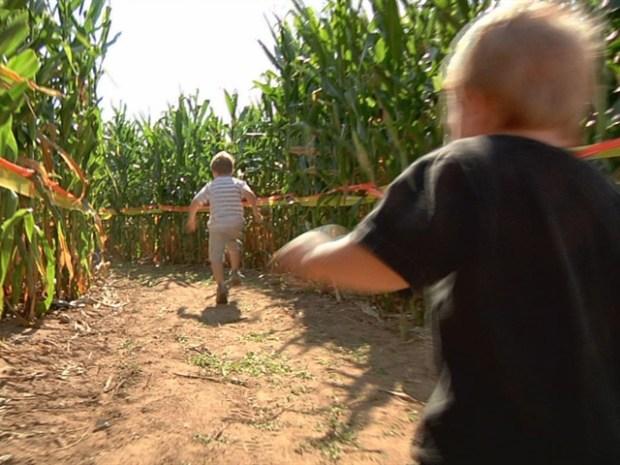 [HAR] Foster Farm Corn Maze