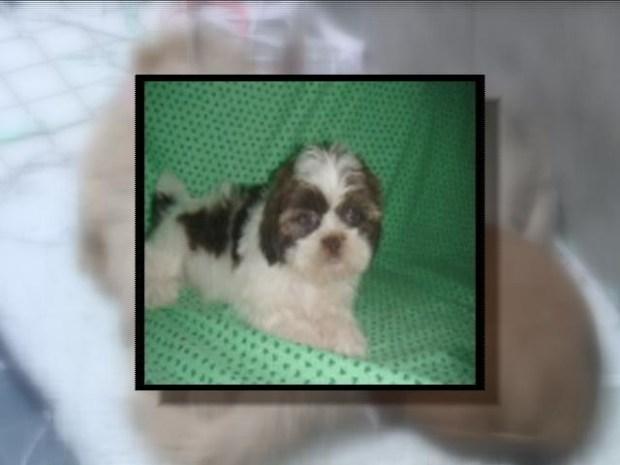 [HAR] Puppy Dognapped
