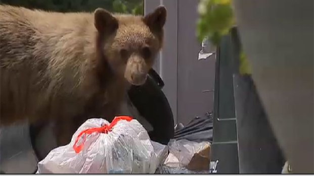 [PHOTOS UPDATED 4/24] Bear Sightings in Southern California