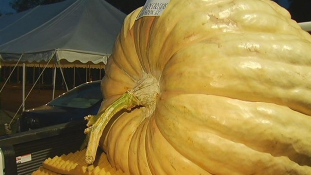 [HAR] The Largest Pumpkin In Connecticut History