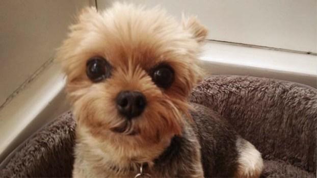 [LA] Deaf Dog Held for Ransom