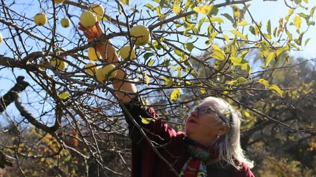 Apple Farmers Endure Crop, Profit Losses as Climate Changes