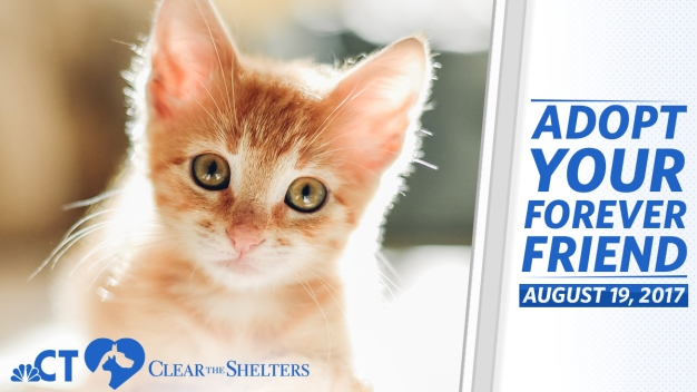 Full List of CT #ClearTheShelters Locations for Aug. 19