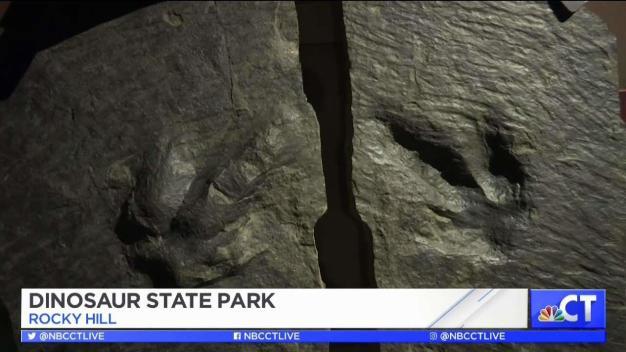 CT LIVE!: Dinosaur State Park