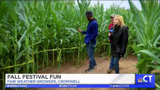 CT LIVE!: Fair Weather Growers Fall Festival