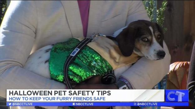 CT LIVE!: Keep Your Pets Safe this Halloween