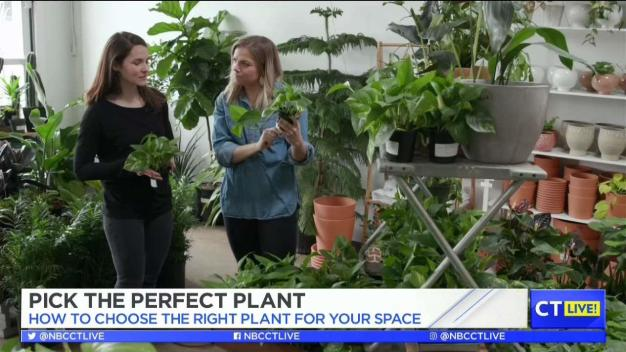 CT LIVE!: Pick the Right Plant