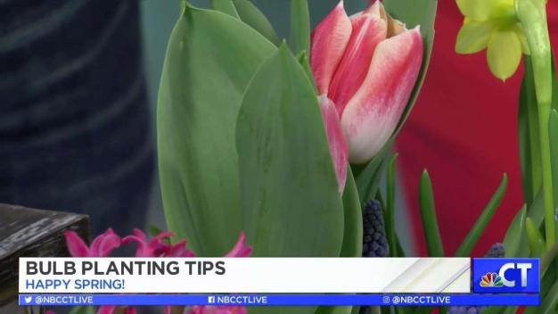 CT LIVE!: Planting Tips for Spring