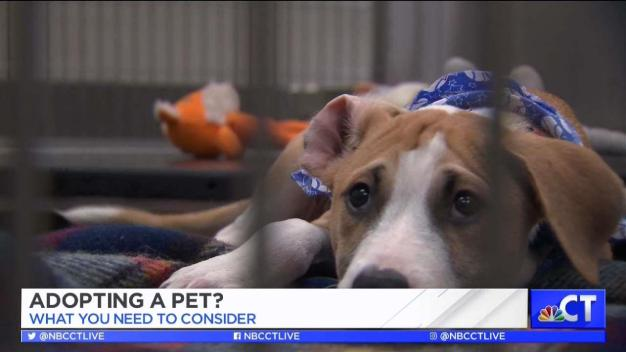 CT LIVE!: What to Consider When Adopting a Pet
