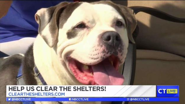 CT LIVE!: You can Help Clear the Shelters by Adopting Flash