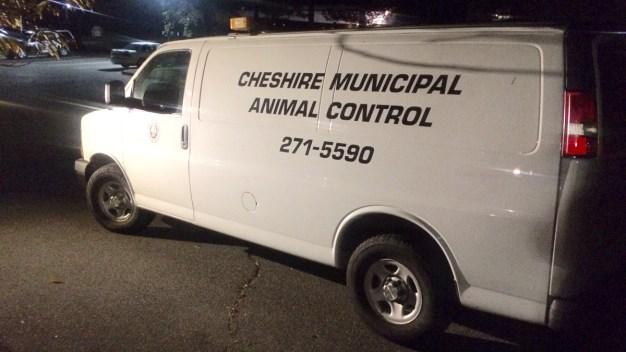 Cheshire Family Recounts Run-In with Rabid Skunk
