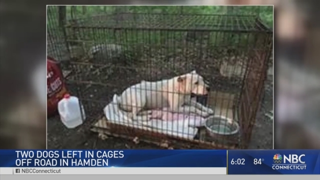 Dogs Found Abandoned in Hamden
