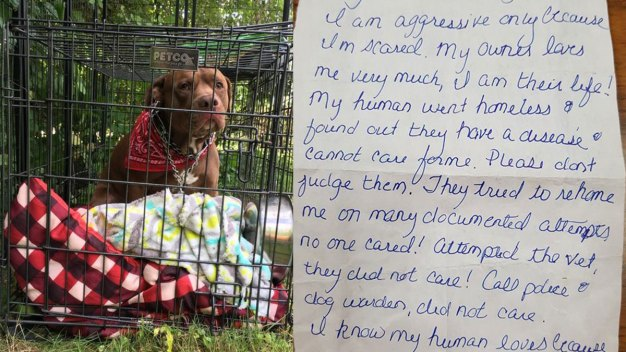 'No One Would Help': Owner Leaves Note With Dog in Harwinton