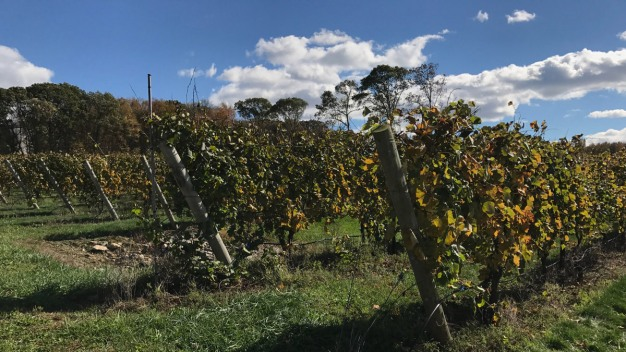 Gales Ferry Winery Says It Prepared For Drought