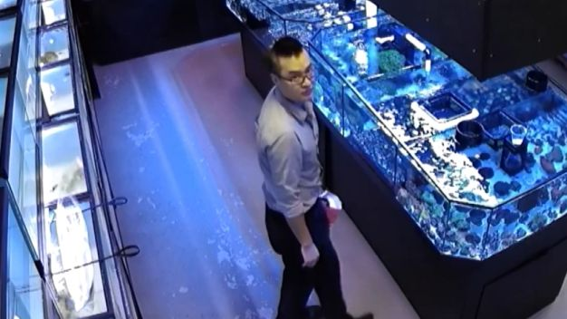 Man Steals Coral From Aquariums