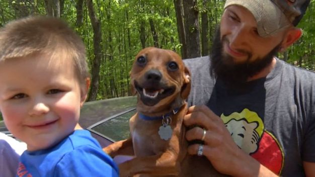 Family Dog Stays With Lost Toddler in Woods Until Both Are Found