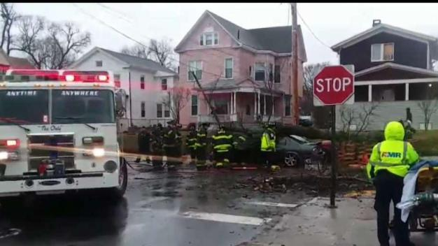 One Taken to Hospital After Tree Falls in New Haven