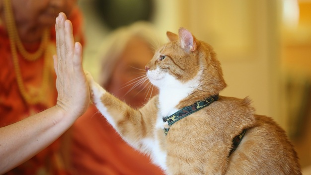 Meow Hear This: Study Says Cats React to Sound of Their Name