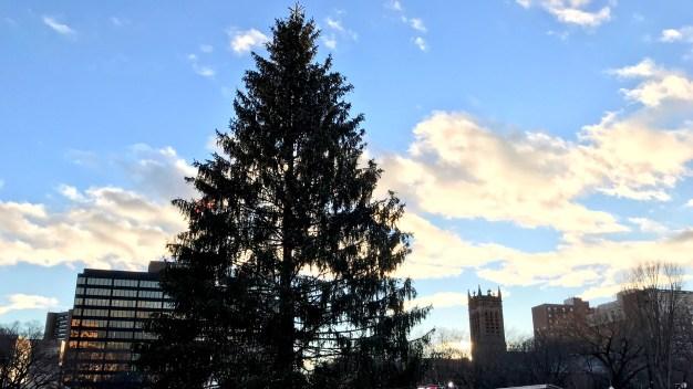 New Haven Tree Lighting