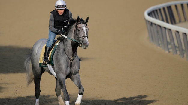 Analysis: Belmont Pick is Tacticus, Aided by Bloodlines