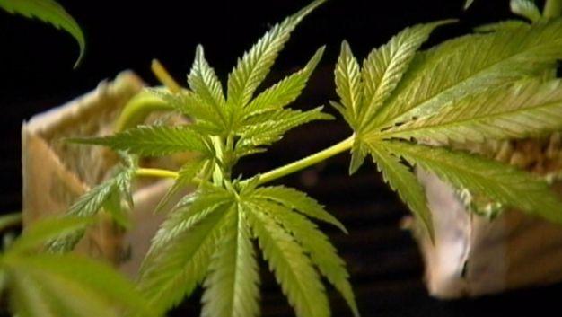 The Pros and Cons of Marijuana Use