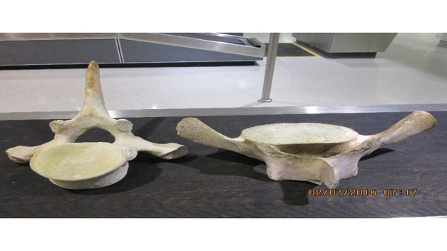 Whale Bones Found in Luggage at DC-Area Airport