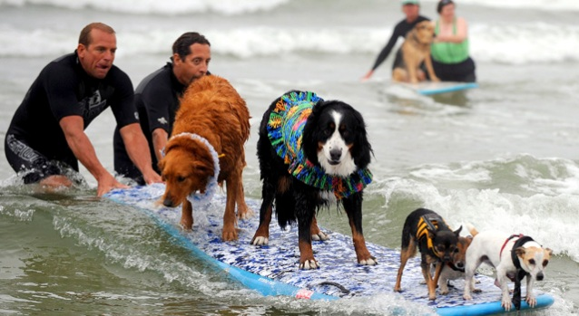 Pups Hit the Beach for Loews Surf Dog Competition
