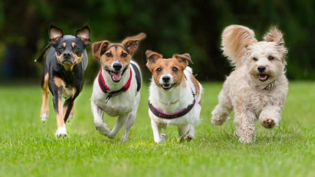 What Kind of Dog Best Fits Your Lifestyle?