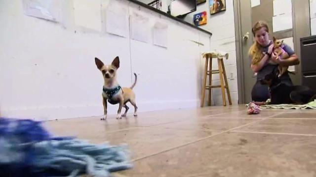 Mass. Shelter Takes Specialized Approach to Pet Adoption