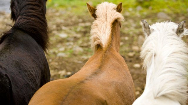 Hot Weather Causes Horse Poop to Burst Into Flames