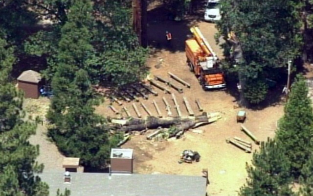 A camp counselor died Wednesday, July 3, 2013, when a tree spontaneously fell on her at a popular Jewish summer camp near Yosemite National Park.