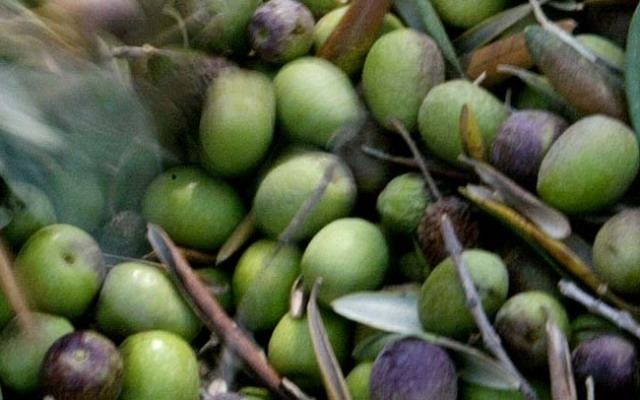 There is a recall for Bel Frantoio olives sold at Ocean State Job Lot.