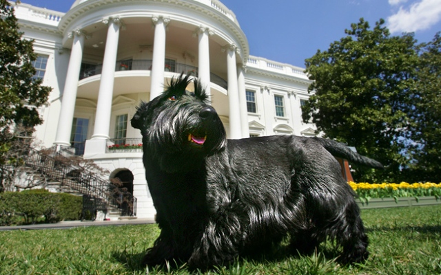 Barney, President Bush's Scottish Terrier, is seen on the South Lawn of the White House Thursday, April 6, 2006 in Washington. The former president announced that the twelve and a half year old dog recently passed away after suffering from lymphoma. (AP Photo/Charles Dharapak)