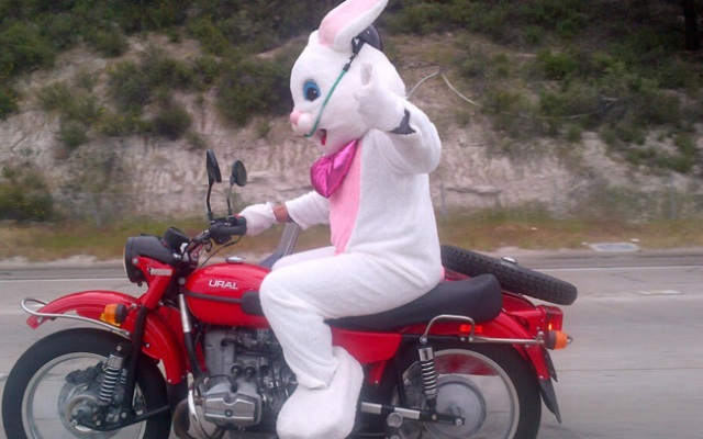 NBC 7 reporter Artie Ojeda captured this image of the bunny on Interstate 15 on Saturday.