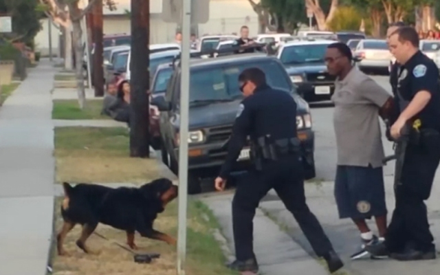 Hawthorne police fatally shot a dog in an incident recorded on video and posted on YouTube on Sunday, June 30, 2013.