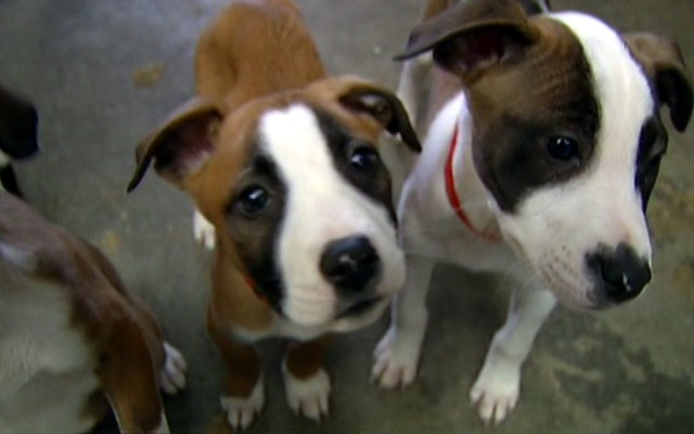 These pups are now eligible to visit certain consenting patients at Rush University Medical Center.