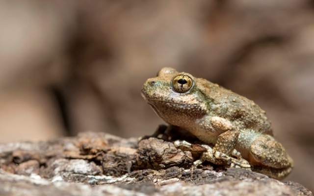 Police were called when a neighbor made a noise complaint. When they arrived they found that the loud disturbing noises were the sounds of frogs fornicating.