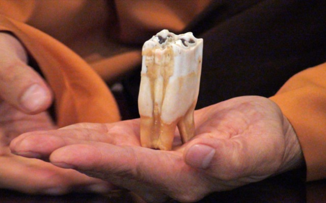 Hundred flocked to a Buddhist temple in Rosemead to view a 2,500-year-old still-growing tooth believed to have belonged to Buddha himself, a monk at the Lu Mountain Temple said.
