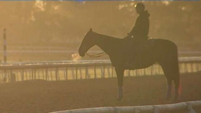 34th Horse Dies at Santa Anita Track After Leg Injury