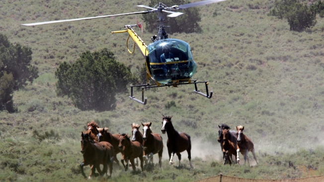 Trump Budget Would Permit Selling Wild Horses for Slaughter