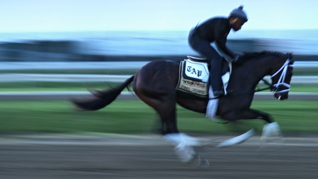 Preakness Draw: Always Dreaming, Classic Empire Are Neighbors