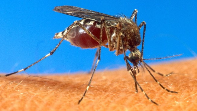 State Begins Mosquito Management Program