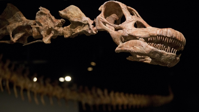 Meet Patagotitan, (Probably) the New Heavyweight Champion of Dinosaurs