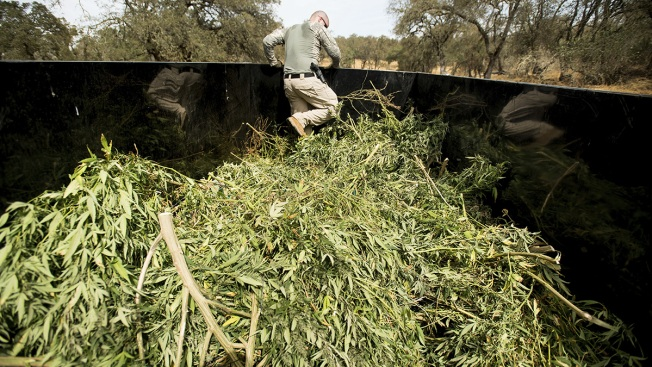 Bracing for New Weed Laws, Some Calif. Officials Are 'Overwhelmed'