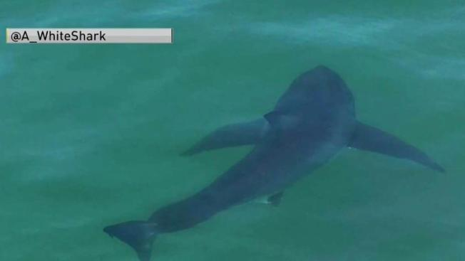 Cape cod beach closed due to sharks