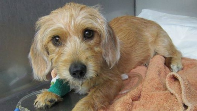 Middletown Animal Control Needs Help Saving Sick Puppy