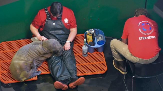 Connecticut Needs Volunteer Firefighters