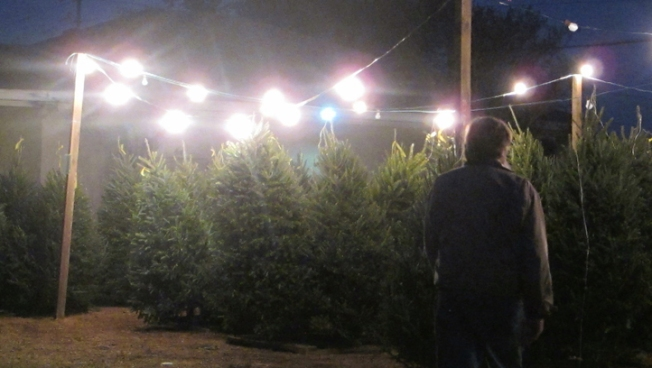 German Scientists Working to Clone Perfect Christmas Trees