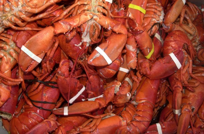 Commission Drops 5-Year Lobster Ban Proposal: Courtney